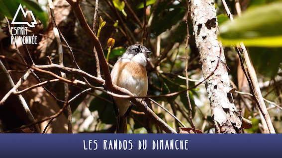 Ilet Alcide ** / Rando du Dimanche